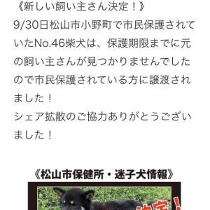 """""""新しい飼い主さん決定!*No.46柴犬"""""""
