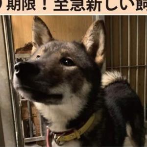 """""""松山市保健所・迷子犬情報!*No.51雑種犬 庄府付近"""""""