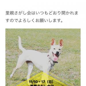 """""""11月10日(日)  犬猫里親さがし会報告"""""""