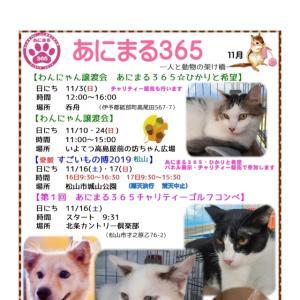 """""""11/10(日)坊っちゃん広場での譲渡会のご報告"""""""