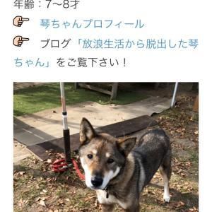 """""""12/8 犬猫里親さがし会参加犬猫紹介"""""""