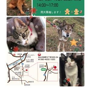 """""""12月8日(日)  犬猫里親さがし会報告"""""""