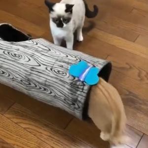 """""""初めてのトンネルおもちゃ"""""""