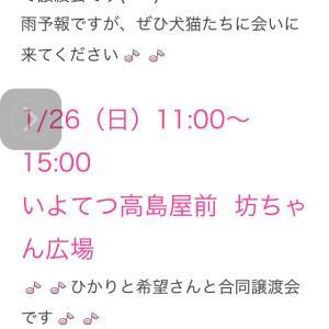 """""""1/26(日)は坊ちゃん広場にて譲渡会です!"""""""