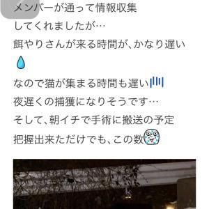 """""""県北TNR開始!(ง •̀_•́)ง"""""""
