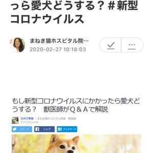 """""""■Yahoo!ニュース もし新型コロナウイルスにかかっら愛犬どうする?#新型コロナウイルス"""""""