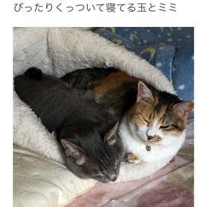 """""""まったりさんたち"""""""