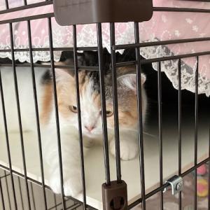 ベットの下に隠れる同居猫