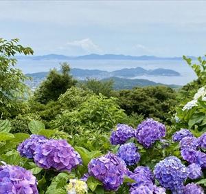 三ヶ根山スカイラインの紫陽花
