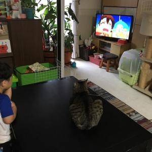 テレビっ子 1