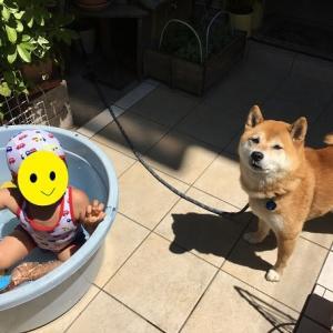水浴びデビュー
