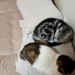 一緒に寝てた!