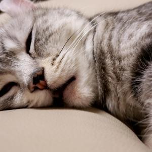 至福の寝顔