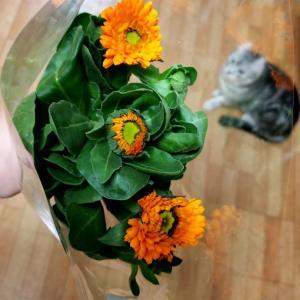 ニーナのお花