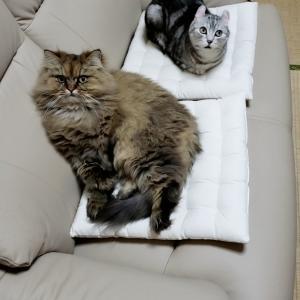 猫たち 爪切り