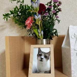 ニーナさんのお花事情