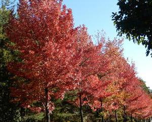 長距離散歩で紅葉と遊ぶ