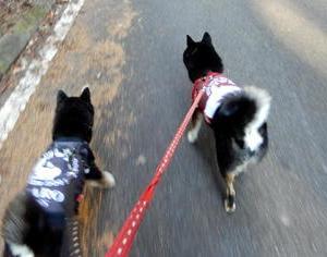 松平郷のんびり散歩 最終回