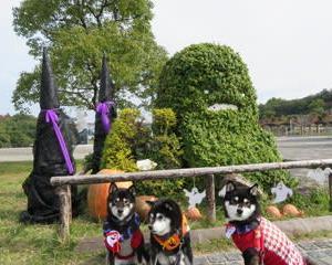 モリコロパークのハロウィン飾り