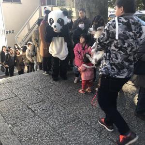 2020年~ラッキーパンダ、新年の出現です…♪♪