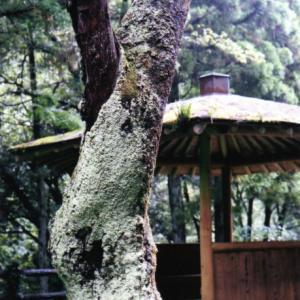 森の中の休憩所