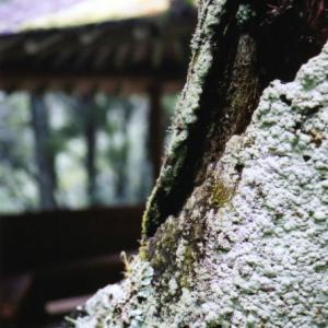 苔の生えた木肌
