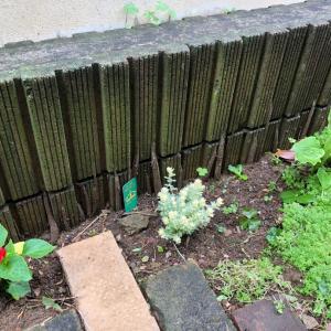 地蜘蛛だらけの庭だけど少しずつ整えてます