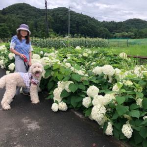 連休後の軽井沢、雨だね~。懐かしい山旅、月山から万歳!