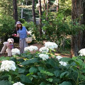 軽井沢続き。お花探してお散歩しましょ!