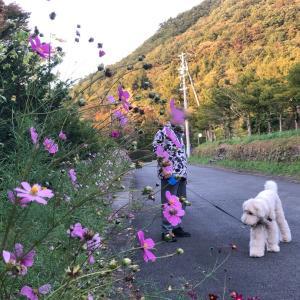 軽井沢、間もなく美しい紅葉の世界、待ち遠しいな。