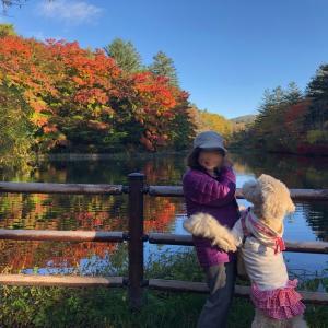 軽井沢。スワンレイク(雲場池)の紅葉、10月25日!