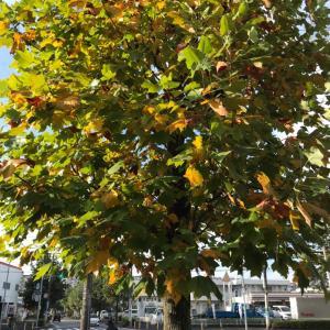 秋の朝ランニング