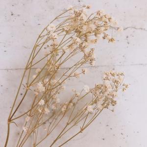 今日七夕は「かすみ草の日」でもあります!