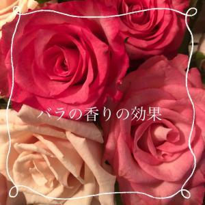 バラの香りがもたらす女性に最高の効果