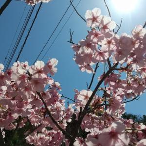 穏やかな春もそこにはある