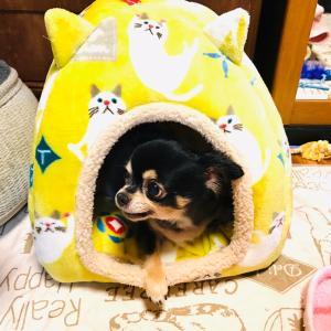 リズにゃんのベッド☆〃
