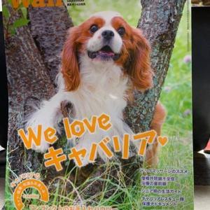 Wan 9月号 「We lave キャバリア」もうすぐ発売です!☆