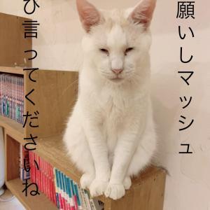 【お得情報】30日(土)のコーヒーイベント