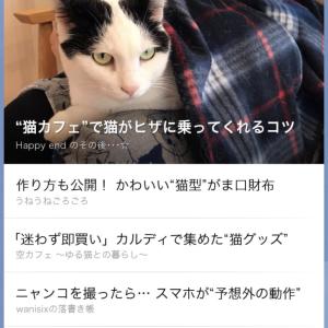 R2.2.22 猫の日