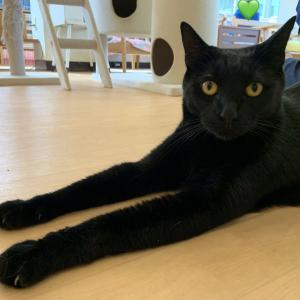 黒猫・ノワール