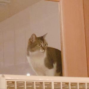 猫式のツチノコ