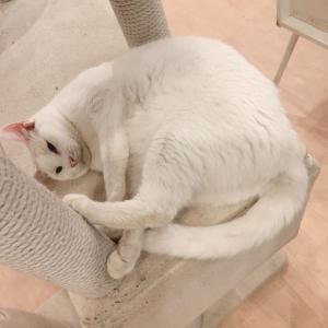 映える猫ベッド