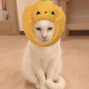 ハロウィンクイズ~番外編~