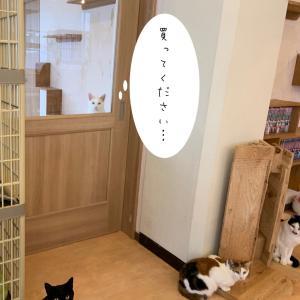 【猫式カレンダー】楽天・アマゾンで取扱開始