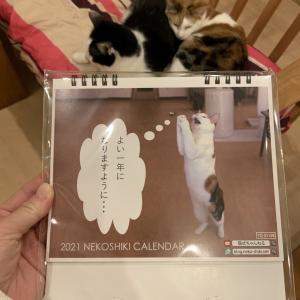 猫式カレンダー、店頭販売開始!