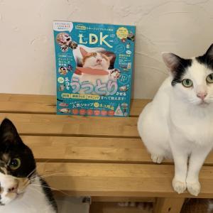 忖度なしガチ雑誌・ネコDK Vol.6
