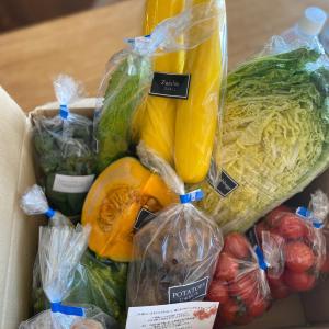 【教えたくないけど】食べチョクおすすめ野菜 どれを買ったらいいか迷ってる方へ