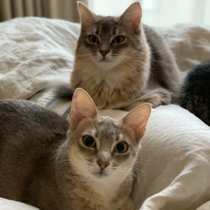 猫のしゃっくり、びっくりしたら止まる?