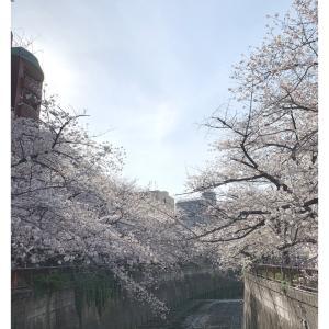 目黒川の桜と思い出 / 2021.4.1