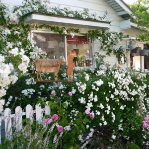 バラの庭を訪問 part 2